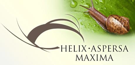Helix Aspresa Maxima
